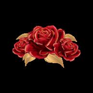 beauty-roses