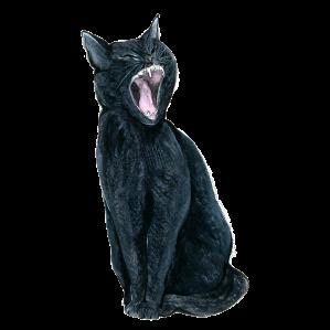 frou-frou-black-cat
