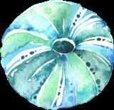 Seashells_09