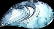 Seashells_21