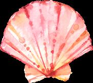 Seashells_06