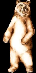 bedlam bear