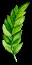 bedlam fern 1