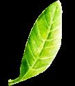 bedlam leaf 3