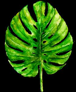 bedlam leaf 8