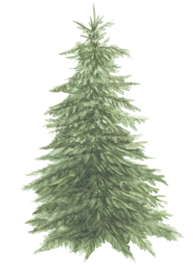 bedlam tree 12
