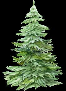 bedlam tree 5