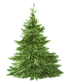 bedlam tree 7