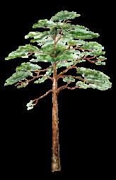 bedlam tree 9